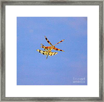 Dragon Fly-3 Framed Print by Robert Pearson