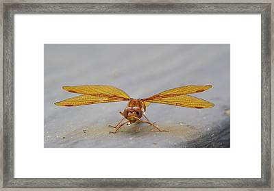Dragon Fly Hanging Around Framed Print