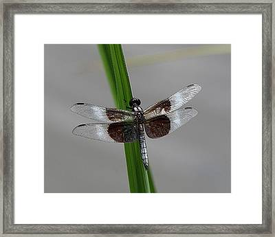 Framed Print featuring the photograph Dragon Fly by Jerry Battle