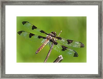 Dragon Fly Framed Print by John Ohm