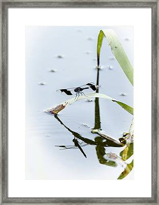 Dragon Fly Framed Print by Patrick Kain