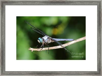 Dragonfly Portrait Framed Print