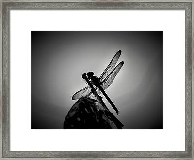 Dragon Fly Framed Print by William Jones