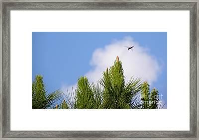 Dragon-flying Framed Print by Terri Mills