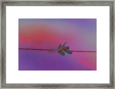 Dragon Love And Its Fire 5 Framed Print