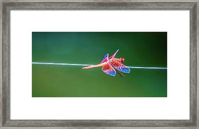 Dragon Resting Framed Print