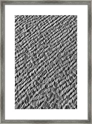 Dragon Scales Framed Print
