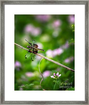 Dragonfly Waiting For A Mate Framed Print by Tamyra Ayles