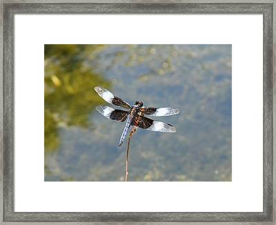 Dragonfly 1 Framed Print by Bruce Miller