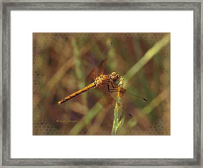 Dragonfly 1 Framed Print