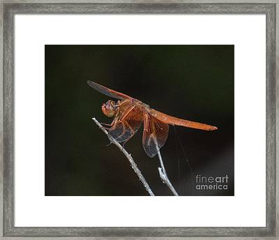 Dragonfly 11 Framed Print