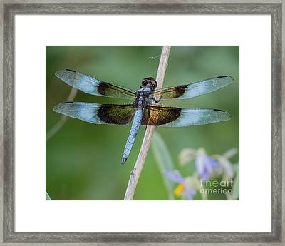 Dragonfly 12 Framed Print