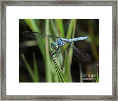 Dragonfly 13 Framed Print