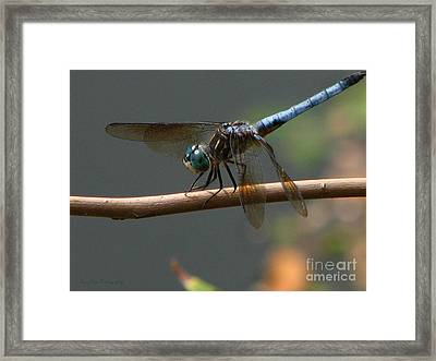 Framed Print featuring the photograph Dragonfly 2010 by Roxy Riou