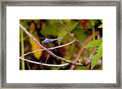 Dragonfly And Tree Frog Framed Print