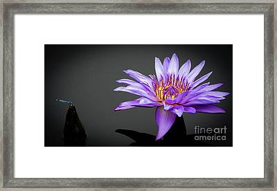 Dragonfly And Water Lily Framed Print