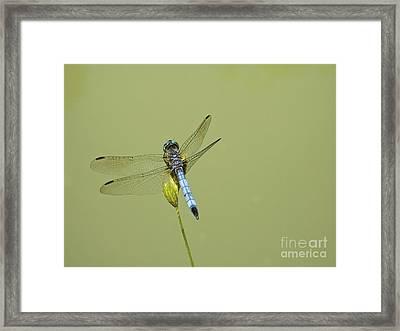 Dragonfly Framed Print by Andrew Kazmierski