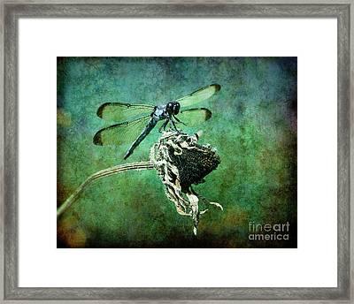 Dragonfly Art Framed Print by Sari Sauls