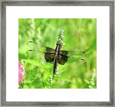 Dragonfly Beauty Framed Print
