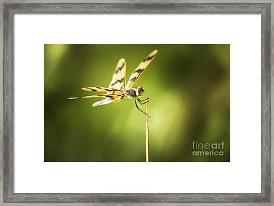 Dragonfly Clutching Fern Blade Framed Print
