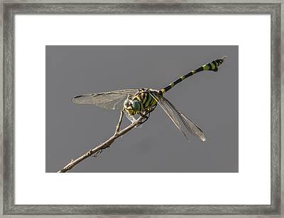 Dragonfly Dinner Framed Print by Teale Britstra