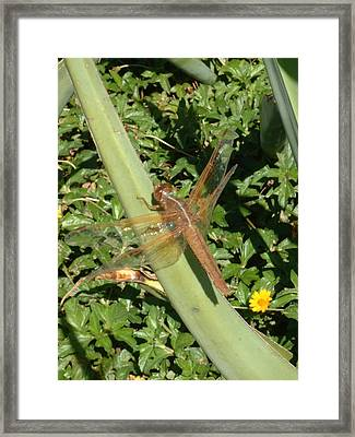Dragonfly Framed Print by E M Murray