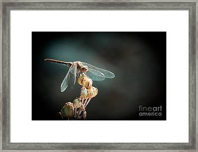Dragonfly Framed Print by Gabriela Insuratelu