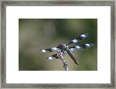 Dragonfly Hanging On  Framed Print by Jeff Swan