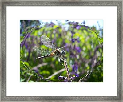Dragonfly In Bubble Framed Print
