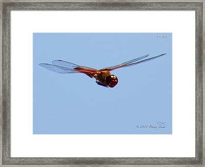 Dragonfly In Flight Close Up Framed Print by Brian Tada