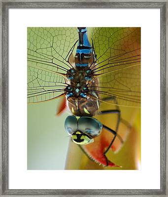 Dragonfly In Thought Framed Print