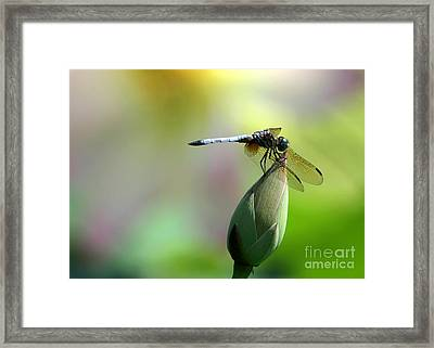 Dragonfly In Wonderland Framed Print by Sabrina L Ryan