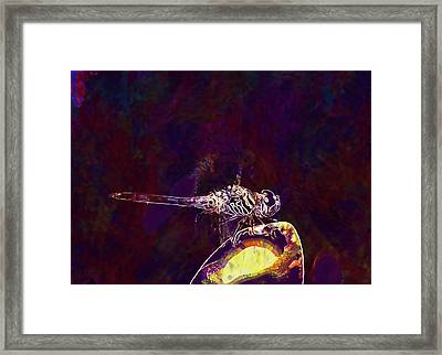 Dragonfly Insect Colorful Nature  Framed Print