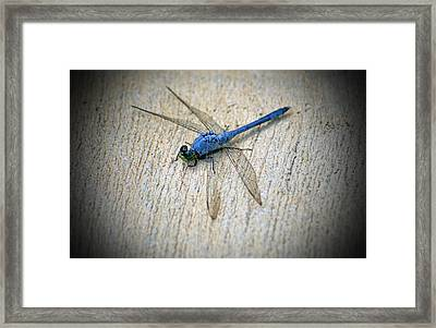 Dragonfly Framed Print by Jean Haynes
