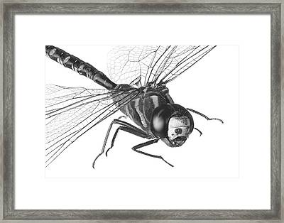 Dragonfly Framed Print by Jim Hughes