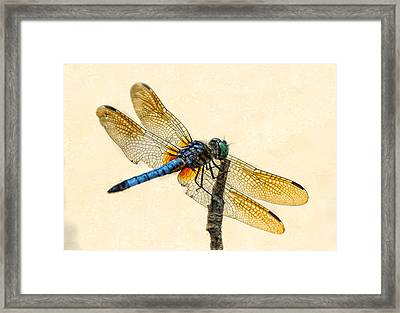 Dragonfly Framed Print by Jim Moore