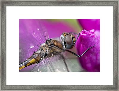 Dragonfly Macro Framed Print by Janet Fikar
