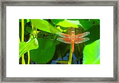 Dragonfly Framed Print by Mark Barclay