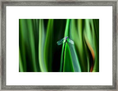 Dragonfly Meditation Framed Print