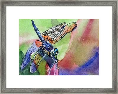 Dragonfly Of Many Colors Framed Print