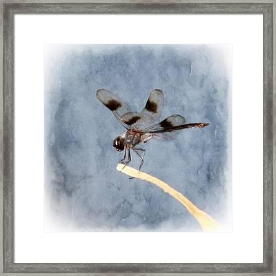 Dragonfly On Edge  Framed Print