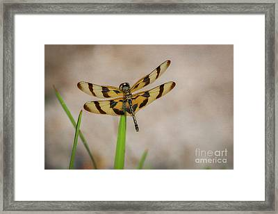 Dragonfly On Grass Framed Print