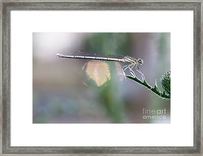 Framed Print featuring the photograph Dragonfly On Leaf by Michal Boubin