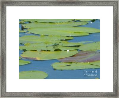 Dragonfly On Lily Pad Framed Print