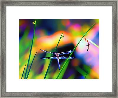 Dragonfly On Pastels Framed Print by Bill Tiepelman