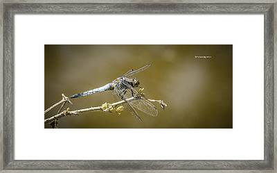 Framed Print featuring the photograph Dragonfly On The Spot by Stwayne Keubrick
