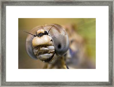 Dragonfly Portrait Framed Print by Andre Goncalves