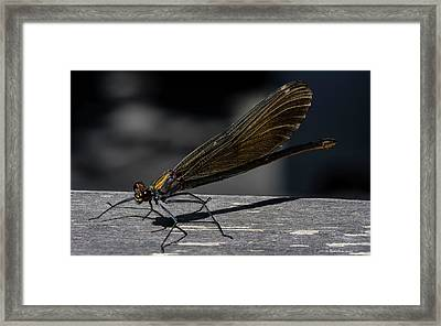 Dragonfly Framed Print by Rainer Kersten