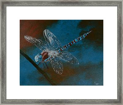Dragonfly Framed Print by Roberta Landers