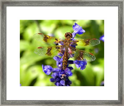 Framed Print featuring the photograph Dragonfly by Sandi OReilly